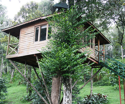 NATURE ZONE JUNGLE RESORT munnar